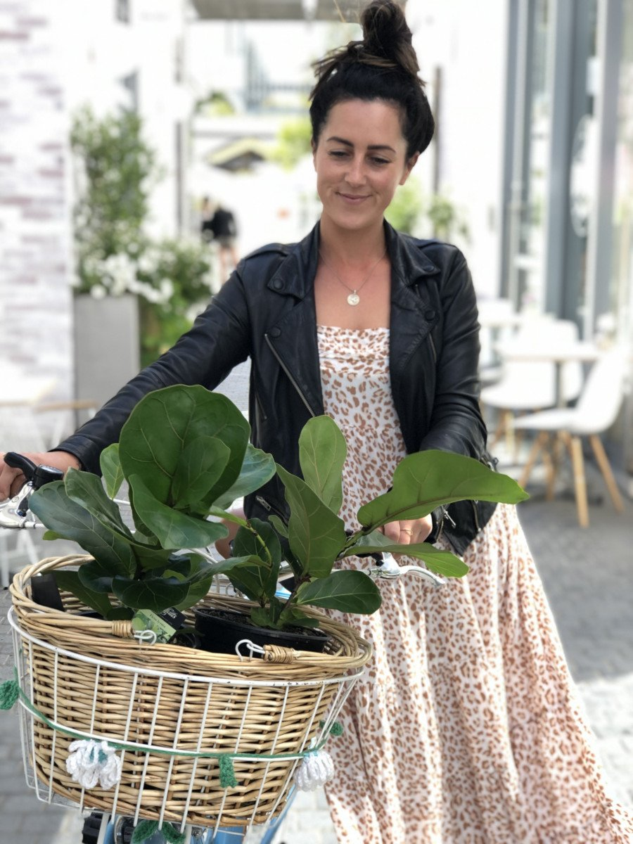 Why our Ficus Friends have Become so Popular?