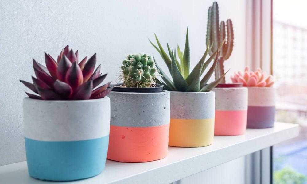 Why Houseplants Make Great Housewarming Gifts