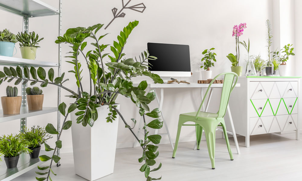 Great Ways to Style your Interiors with Indoor Plants