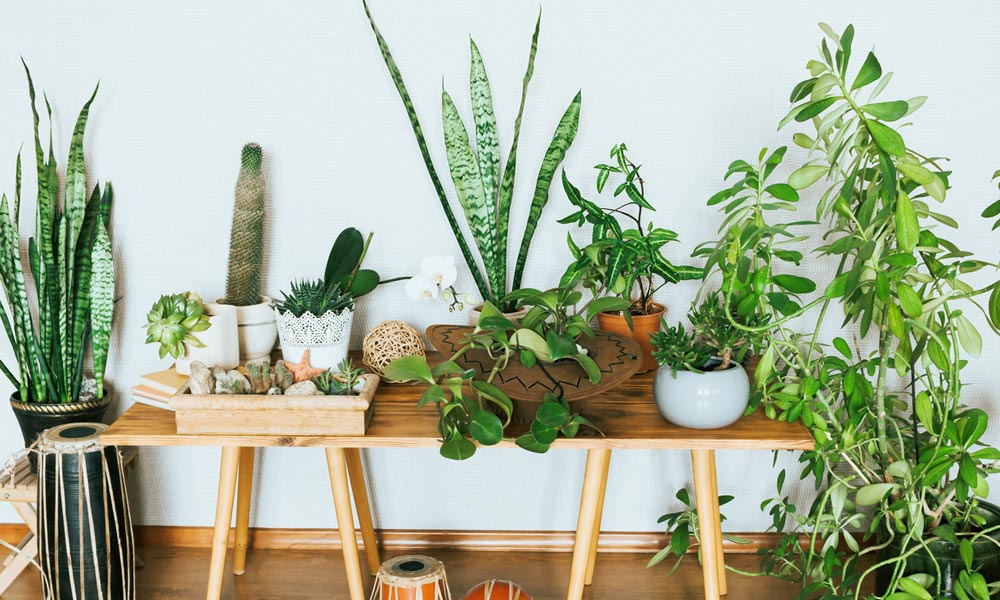 Tips on Caring for your Indoor Houseplants