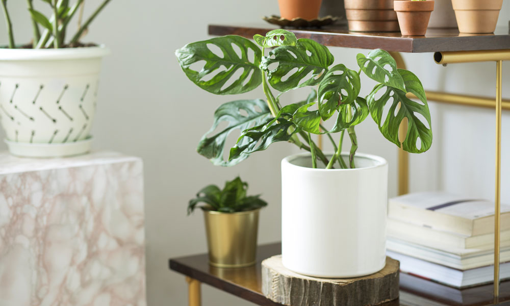Trendy Plants – These are the World's Most Instagrammable Houseplants