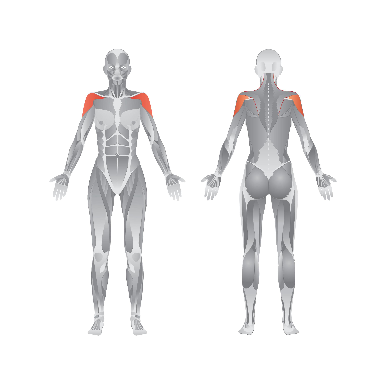 Resistance Band Series - Shoulder Exercises