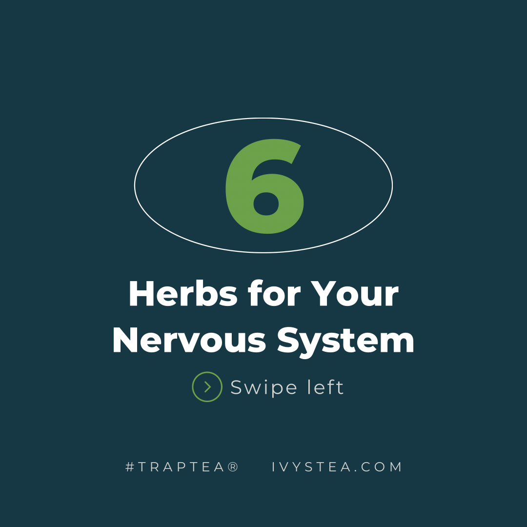 6 Herbs for Your Nervous System Health