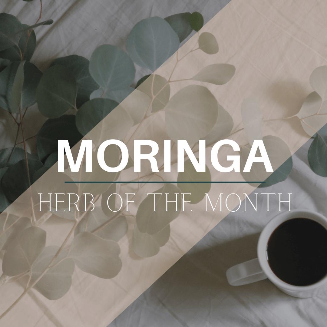 Herb of the Month: Moringa + We're Releasing A New Moringa Tea