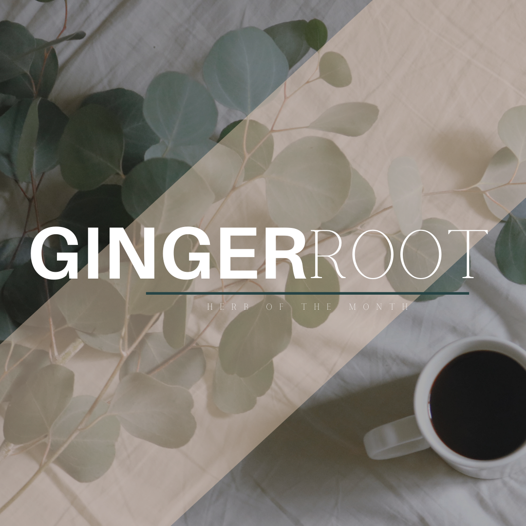 Herb of the Month: Ginger, Why It's Great and How We Use It