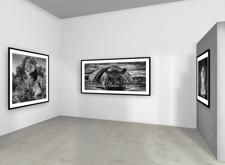DISCOVER THE ONLINE EXHIBITION   DAVID YARROW   WILD HEROES