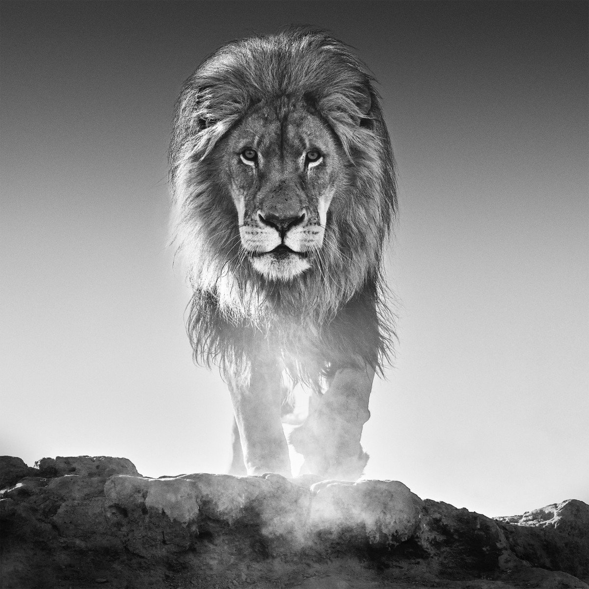 PODCAST | IN FOCUS WITH DAVID YARROW