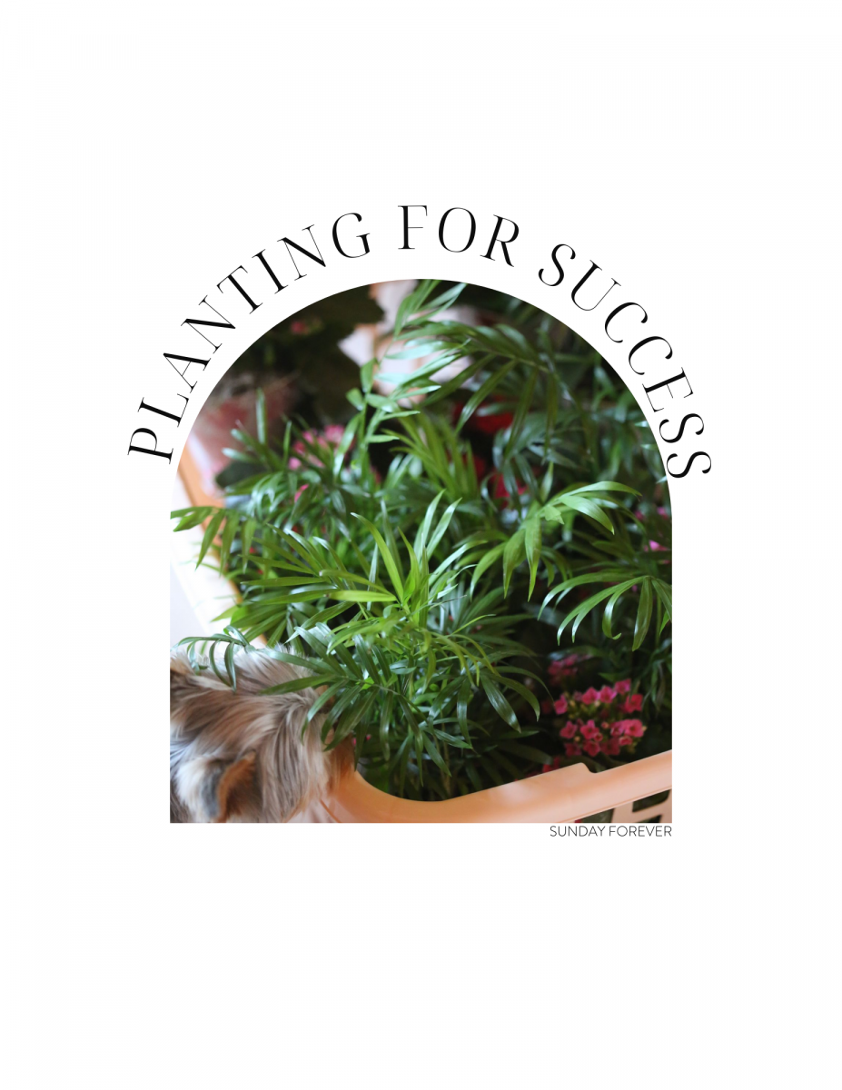 PLANTING FOR SUCCESS: BEST BEGINNER PLANTS