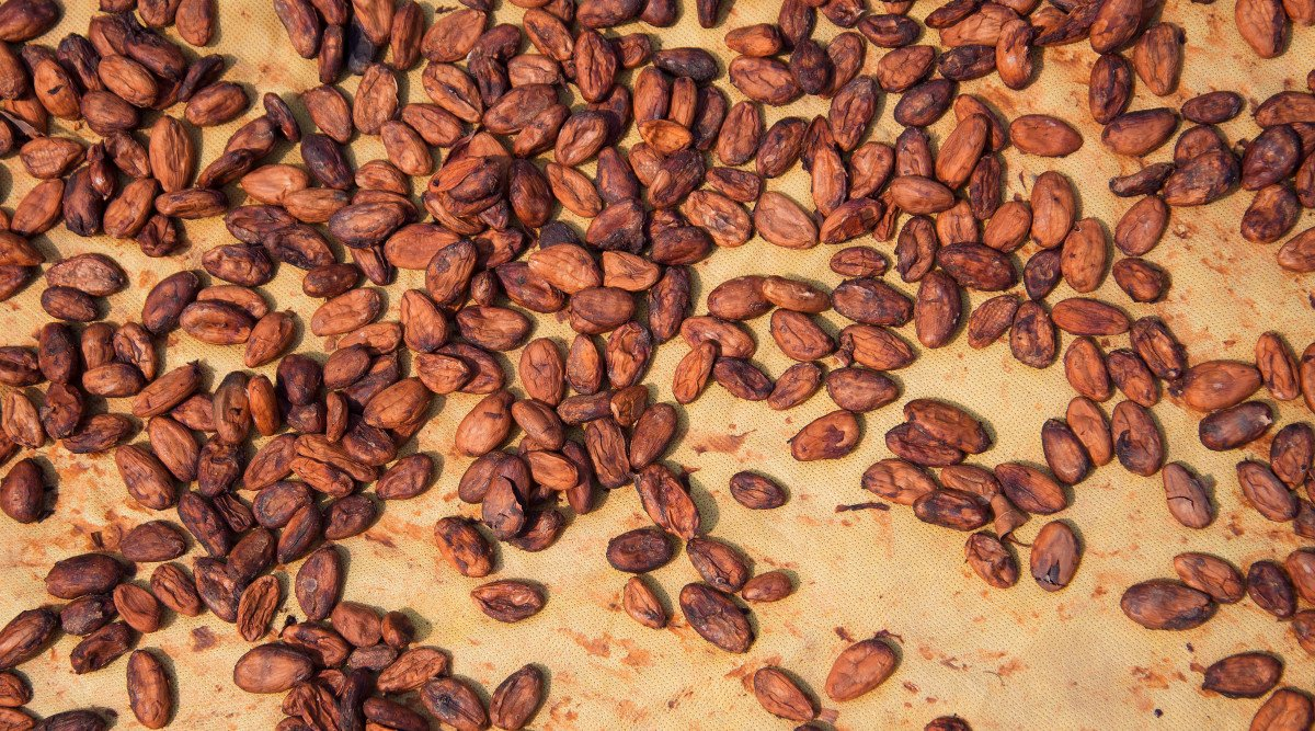 Brewed Cacao image