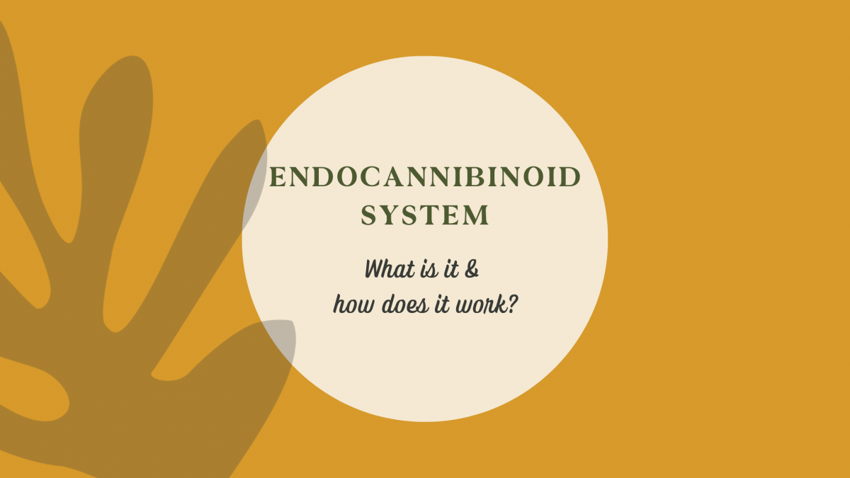 Endocannabinoid System - what is it & how does it work?
