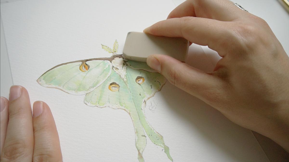 luna moth painting