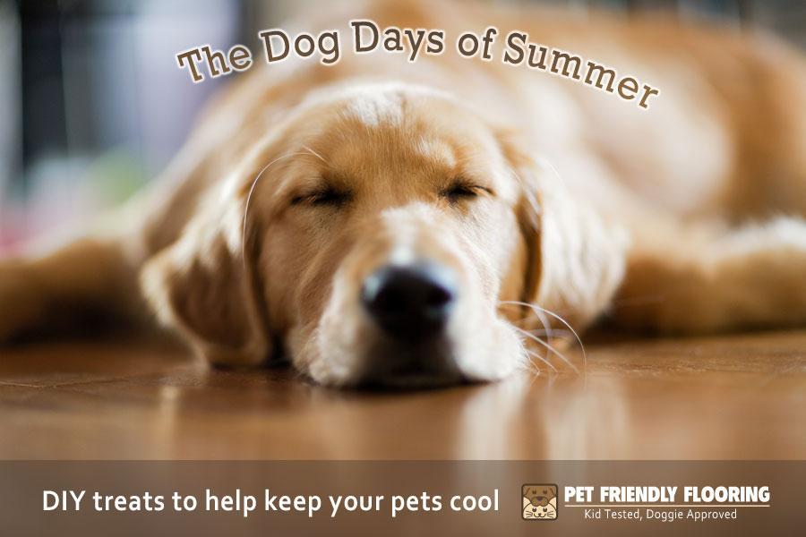 DIY Summertime Dog Treats to Keep your Dog Cool