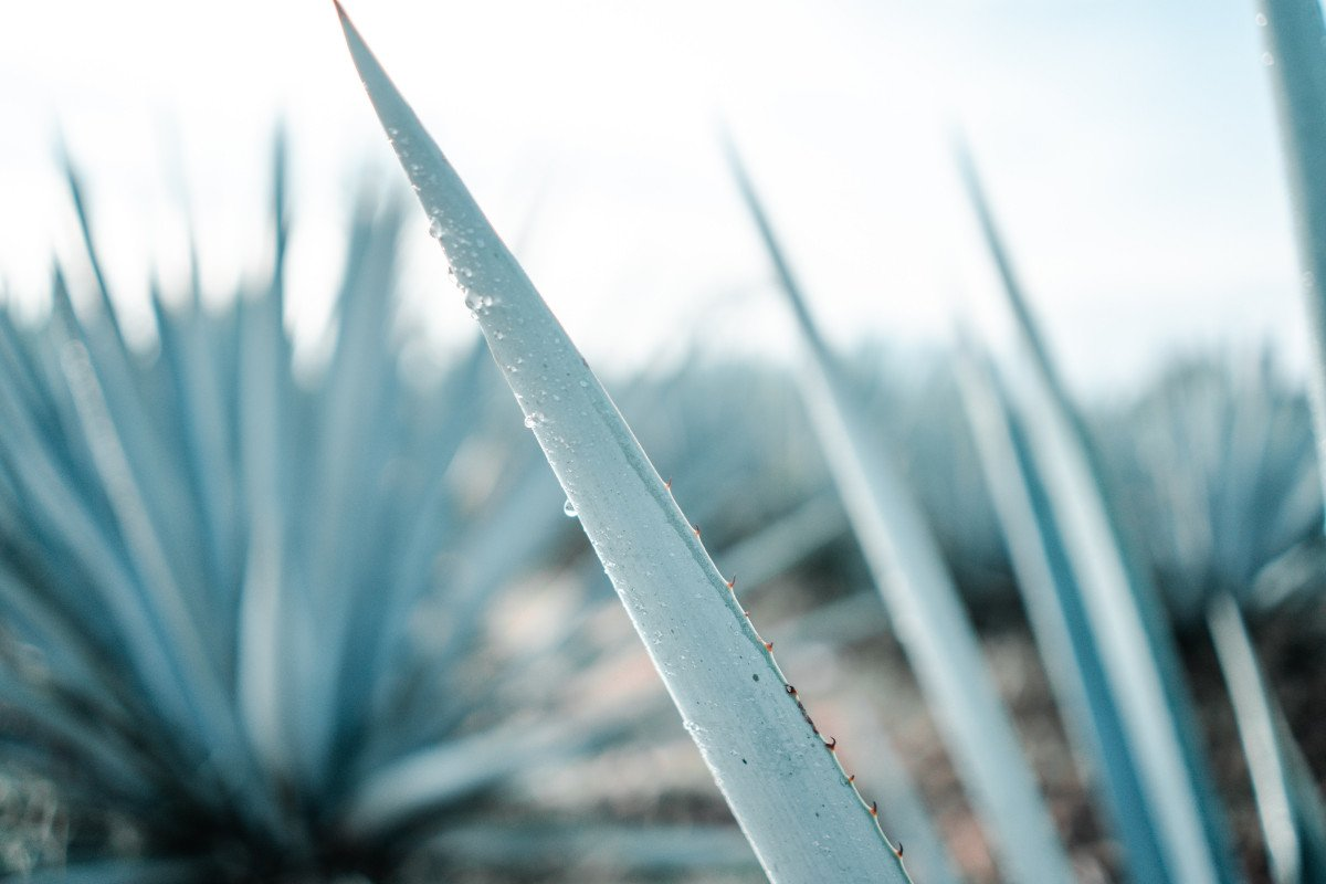 A Guide to Tequila: Summer's Favorite Spirit