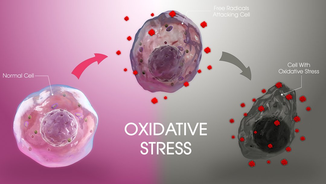 Oxidative Stress | Why You Need It & Why You Don't.