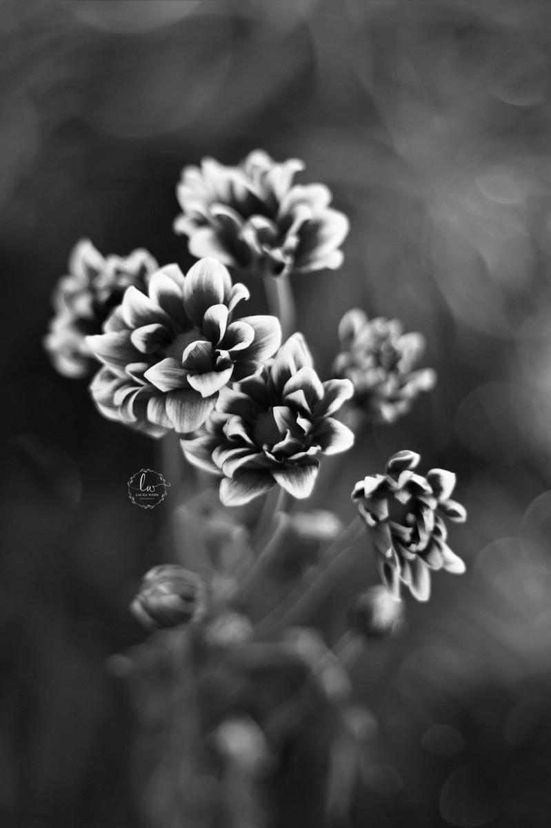 Weekly Top Ten I Photo Contest I Monochromatic