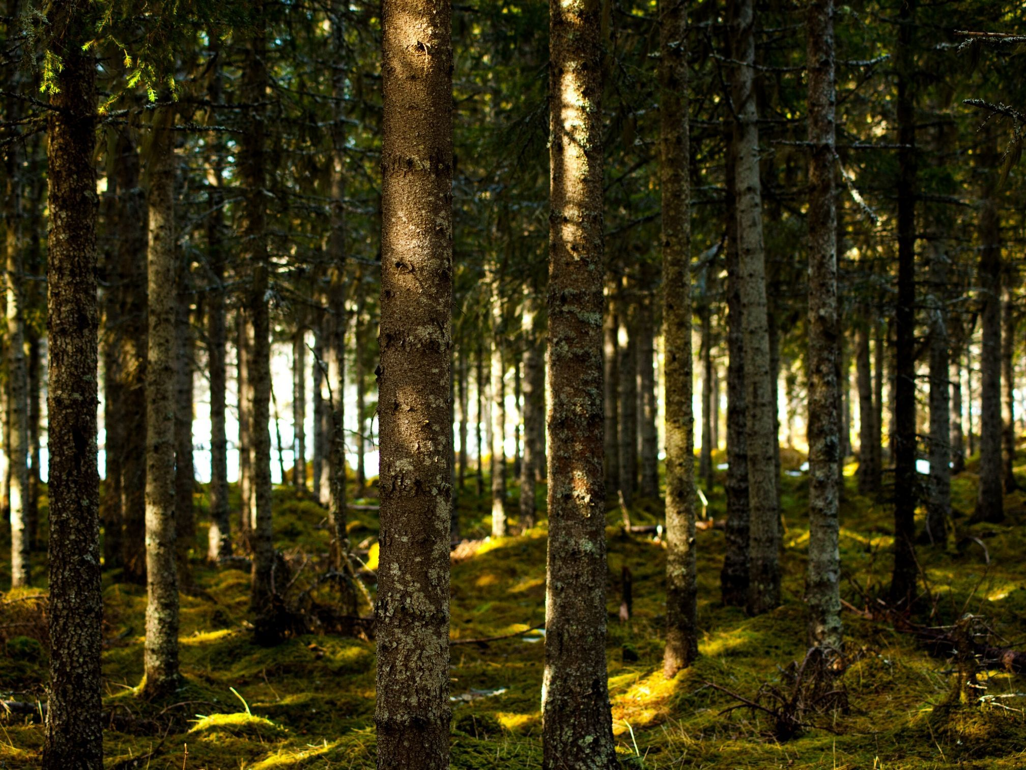 Conflict is back in Tasmania's forests, and two decisions in Victoria could make it worse