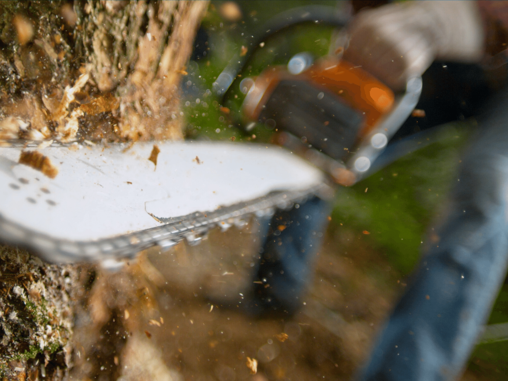 Logging the Tarkine threatens Tasmania's health and economy, doctors say