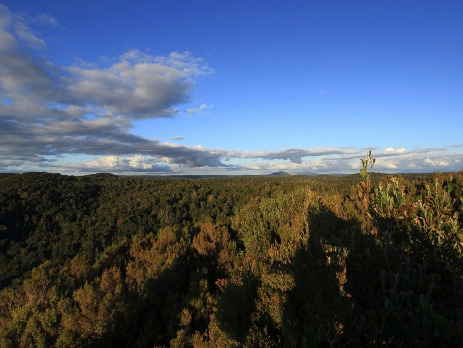 WATCH | Save Tasmanian's Forests –  Bob Brown Foundation