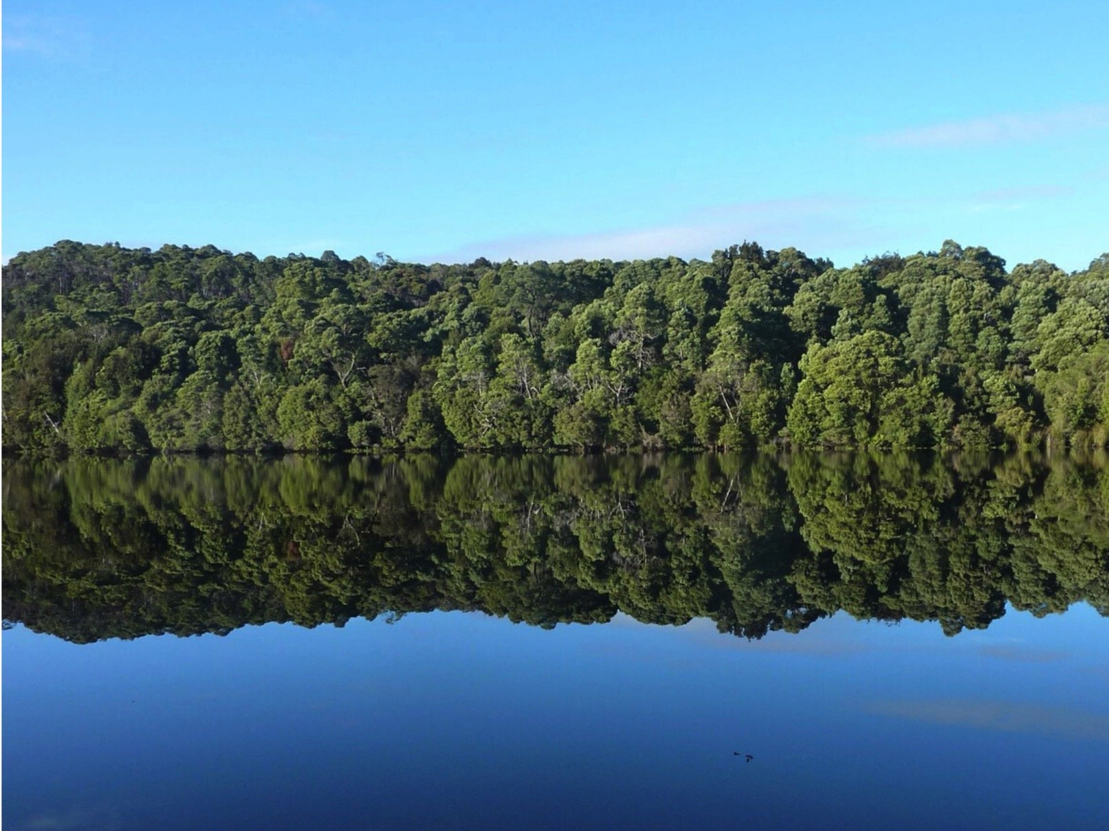 WATCH | Tasmania - The Tarkine Wilderness