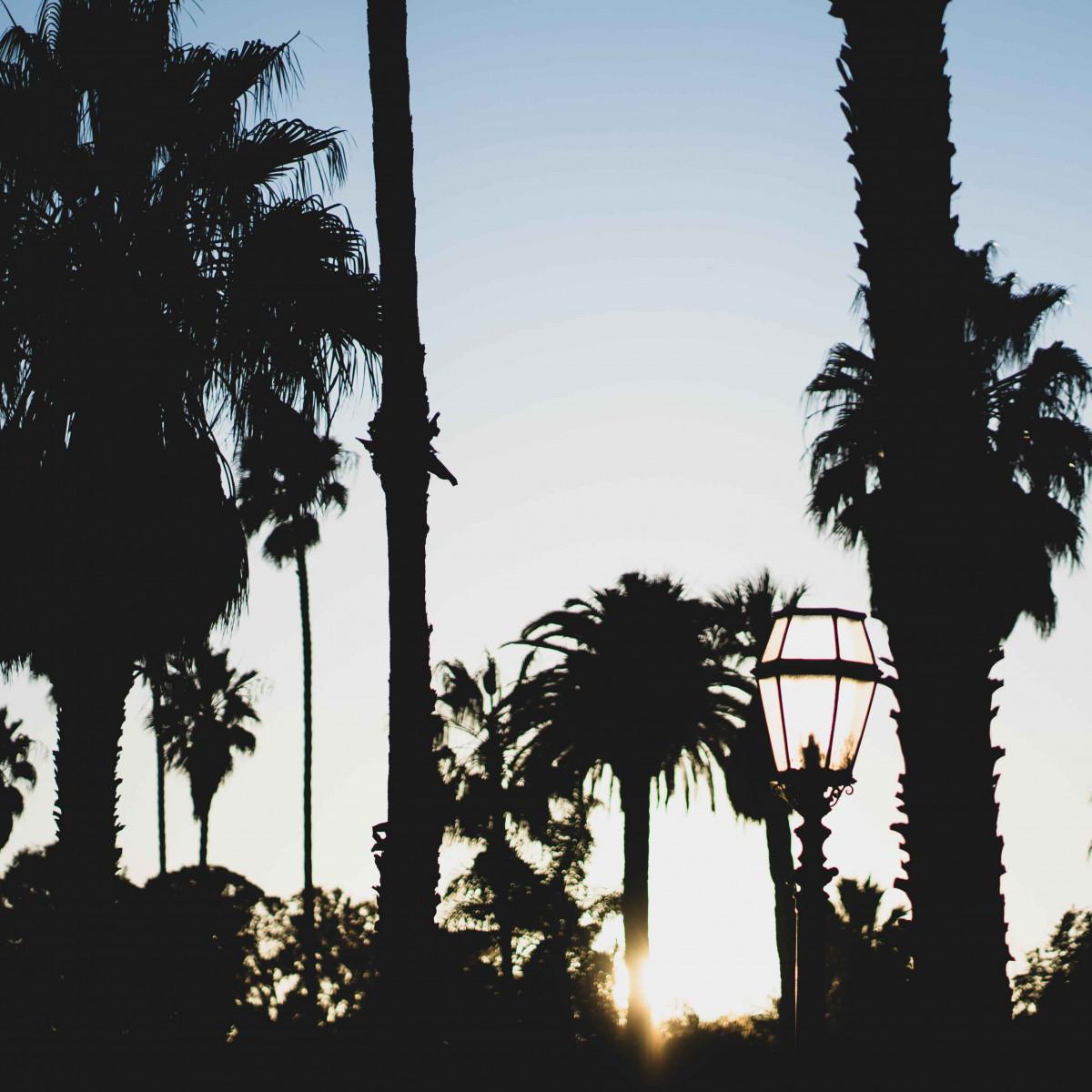 Palmöl: Wieso ist es so schlecht?