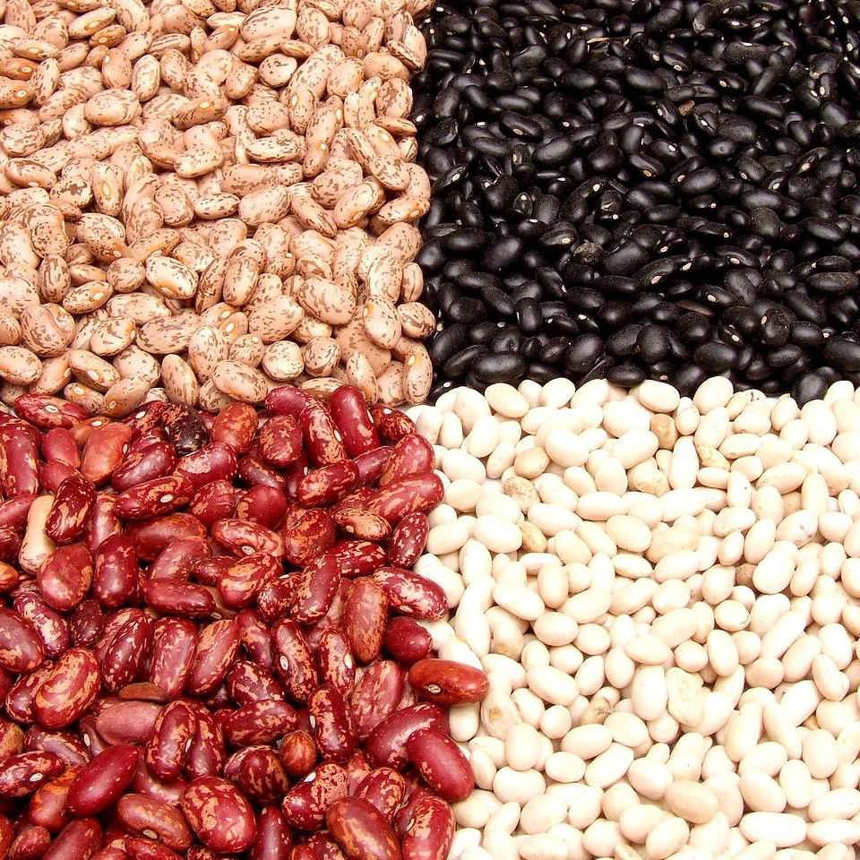 Proteine: Wofür sind sie gut?