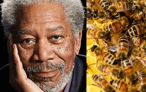 Morgan Freeman (AKA God & Principal Joe Clark) Turns His 124 Acre Mississippi Ranch Into A Honeybee Sanctuary