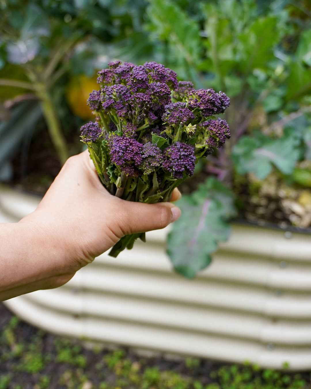 Start Your Garden In The Winter