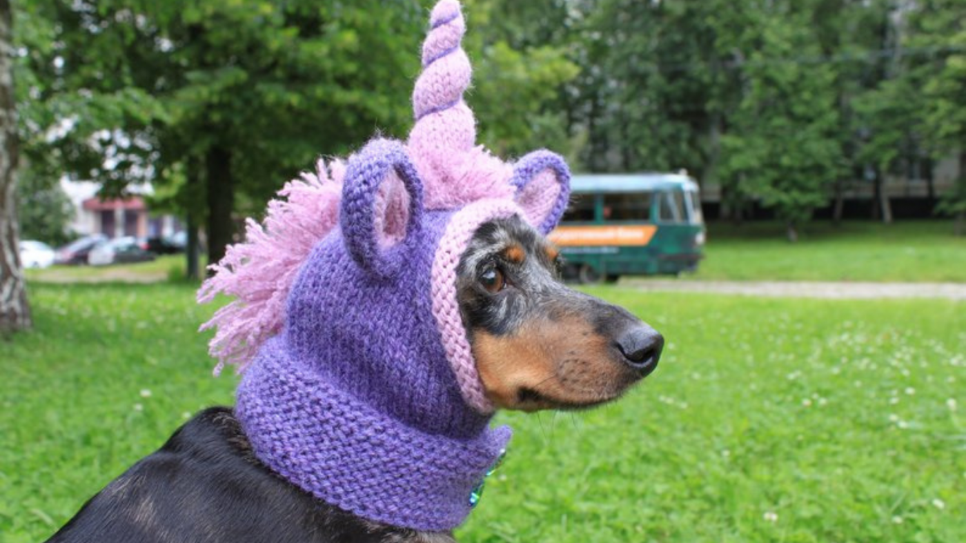 The Top 10 Cutest Dog Hats and Dog Visors