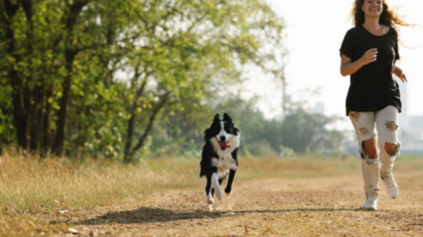 How Fast Can A Dog Run? - EXPLAINED